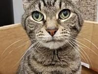 Gribble - DECLAWED's story My name is Gribble. All I