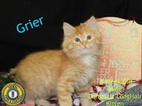 Grier's story You can fill out an adoption application