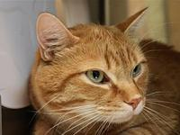 Griffin's story Griffin is a sweet boy who is neutered,