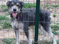 Grimsley's story This sweet fellow is just a happy go