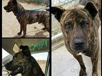 Grizzly's story Grizzly is an amazing dog who needs a