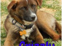 Grizzly is a 6 month old, male, mixed breed boy. Hes