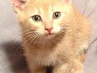 Gronk is a sweet boy with a big purr! He enjoys