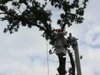 Ground Up Tree & Landscaping LLC is to offer the