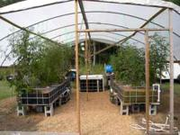 What is AQUAPONICS you say? Its a way to grow fresh