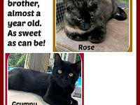 GRUMPY & ROSE, M,F's story These sweet brother and