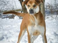 GUAPO is a male Cattle Dog-mix who is super friendly