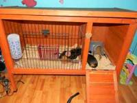 2 guinea pigs plus Large cage. Great pet for kids and