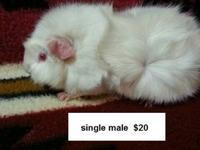 Prices as marked on the pictures. I have several bonded
