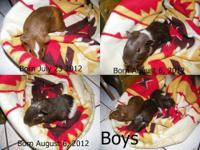 I have 5 guinea pigs available. 3 Boys and 2 girls. I
