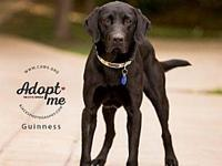Guinness's story Hi Im Guinness I am a 5 year old male