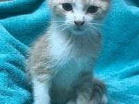 Gumdrop's story He is waiting to be adopted at the