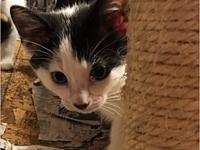 My story Very sweet 2month old male kitten. Neutered,