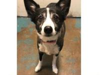 Gumdrop's story Gumdrop was found on 10/7/18 at