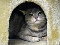 Gummy Bear *Special Adoption Fee's story All our feline