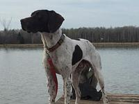 Gunner's story Hi my name is Gunner. I am a very happy