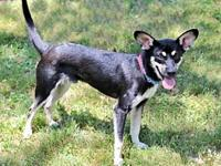 GUNTHER's story This 10 month old Rat Terrier mix