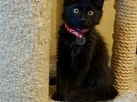 Gunther's story I am a playful kitten who loves to
