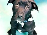 Gus's story Adoption fee is $150, this pup is approx.