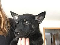 Gustov's story Gustov is a 9 week old mixed breed! This