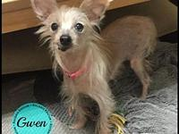 Gwen's story Our Rockers Rescue pets are currently