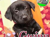 Gwinn's story Gwinn is a young female puppy who was