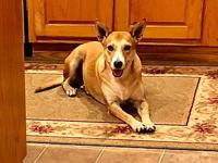 Gypsy's story Gypsy was found as a stray with puppies