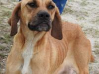 Gypsy is a medium sized female Cur, tan in color.  She