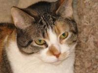 Gypsy's story Gypsy is a beautiful senior calico who