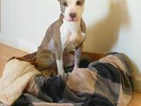 Gypsy is one year old Pit Bull mix. She is a very laid