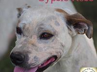 Gypsy Rose's story Gypsy Rose is an amazing girl who