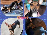 My story Gypsy is crate and house trained with