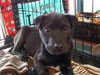 At Wags and Whisker's Pet Rescue:  For foster, rescue,
