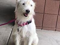 Hadley's story Hadley is a 2 year old female terrier