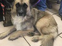 Hagrid's story Smaller sized male shepherd mix . Take
