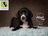 Hail's story I am Lab mix puppy and I will probably