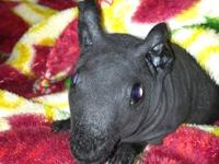 Hello from Penelope`s Piglets! I am a small breeder of