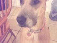 I have 5 beautiful Great Dane young puppies left! Some