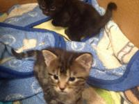 We're selling these two beautiful kittens which one is