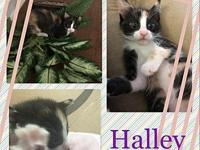 Halley's story All of our kittens are in various foster
