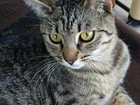 Hallie's story Hallie is a female Tabby, about 6 months