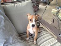 Hallie (Fostered in TN)'s story Angels Among Us Animal