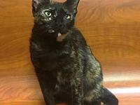 Hallie the Sweet Tortie's story You can fill out an