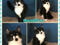Hamilton's story Like to play, this boy is a hit with