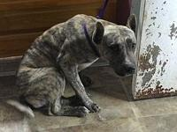 Hamlet's story Hamlet is a male we think Mountain Cur