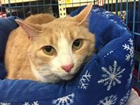 Hammy's story I am a very sweet 6 year old neutered