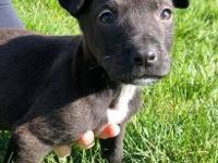 Meet adorable, happy Hampton! Hampton is an 8 week old,