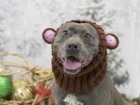 Hana's story Help us welcome Hana (A40258935) to ACCT