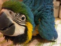 We have 2 littles but one is booked. We breed macaws