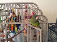 We have a Half Moon Conure, approx 1 year old, with